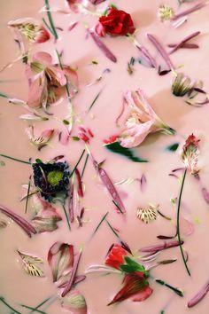 Pétales de fleurs pour enfleurage à chaud