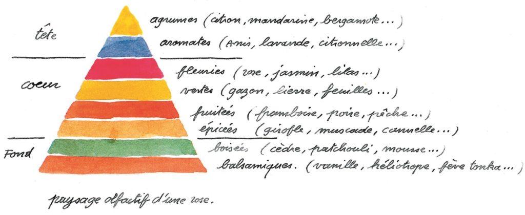 Notes de tête, notes de coeur et notes de fond : la pyramide olfactive montre l'évolution d'un parfum